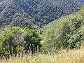 Tuolumne County, CA, USA - panoramio (31).jpg