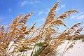 Tybee Island Beach1.jpg