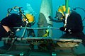 US Navy 080717-N-1974P-033 A U.S. Navy diver and an Australian Defense Forces diver secure wreckage to a shipboard crane during underwater salvage training near Pearl Harbor.jpg
