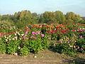 VU botanikos sodas4, 2006-10-18.jpg
