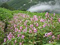 Valley of flowers.JPG