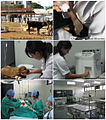 Veterinária UFU.jpg