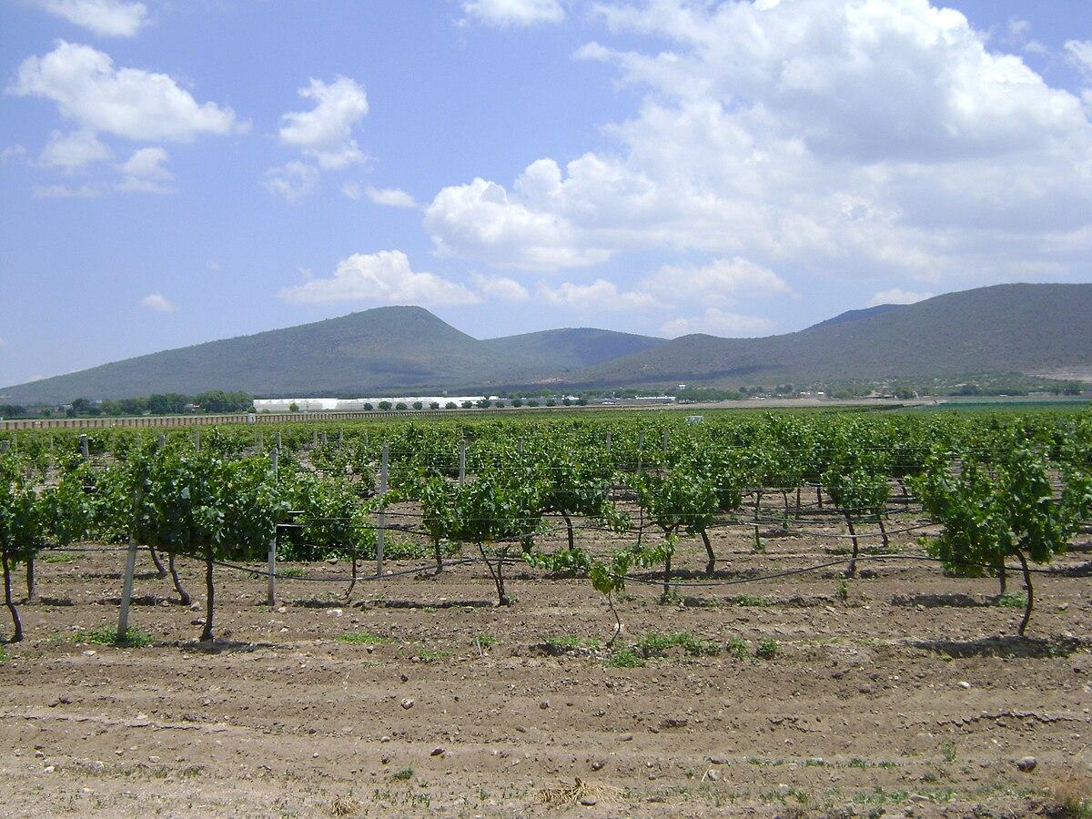 Vino de México - Wikipedia, la enciclopedia libre