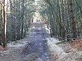 Vicarage Lane near Bagshot - geograph.org.uk - 115299.jpg