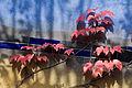 Vienna - Hundertwasser housing complex - 0447.jpg