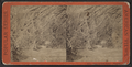 View on Goat Island, Niagara, by E. & H.T. Anthony (Firm).png