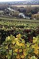 Vigne Pinot noir (Vue sur la Marne) Cl.J.Weber07 JPG. (23677697255).jpg
