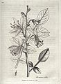 W. Woodville, Medical botany. Wellcome L0025234.jpg