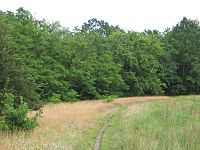 Wald-Luckenwalde-2.jpg
