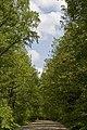 Waldweg zum Großen Holz - panoramio.jpg