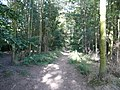 Walton Woods - Footpath - geograph.org.uk - 552937.jpg