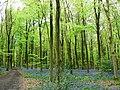 West Woods, near Marlborough - geograph.org.uk - 789243.jpg