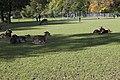 Wildpark Bruderhaus - panoramio (10).jpg