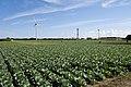 Wind Farm in Choshi 02.jpg
