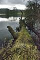 Winter time in Gatton Park (5356553748).jpg