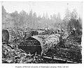Wood Cutting Operation East of Renton (5149012984).jpg