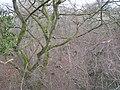 Wooded dingle, Llanhowel - geograph.org.uk - 748606.jpg