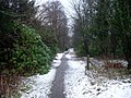Woodland path to Finlay Rise - geograph.org.uk - 1127564.jpg
