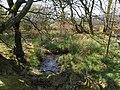 Woodland stream - geograph.org.uk - 1282404.jpg