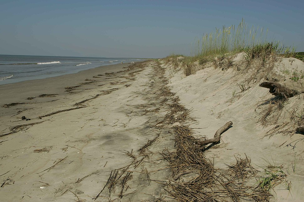 Wrack line reveals last high tide mark near the dunes