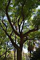 Xicranda al parc de Benicalap.JPG