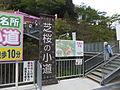 Yamasa fish paste Yumesaki factory phlox in 2013-5-4 No,2.JPG