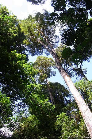 Tapin Tops National Park - rainforest at Tapin Tops National Park