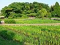 Yokosuka Iris Garden 01.jpg