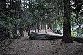 Yosemite (14566237363).jpg