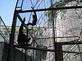 Zoo Besançon 0004.jpg