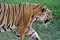 Zoo of Ahmedabad, India (4051888129).jpg