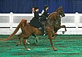 """Elegant Ladies"" (Competitors in the equitation class at the 2008 Worlds Championship Horse Show (2815588742).jpg"