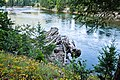 '10 South Slocan River and log jam - panoramio.jpg
