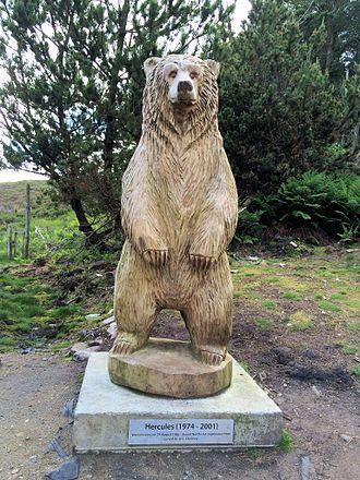 Hercules (bear) - Statue of Hercules the bear at Langass Woods, Isle of North Uist, Scotland
