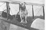 'John Bull', the mascot of Camp Mohawk, one of the Royal Flying Corps' training camps near Deseronto, Ontario, during the First World War. (4565730396).jpg