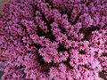 (Purple, Flowers of Ecuador) Photography by David Adam Kess.JPG