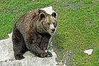 Ähtärin karhut 8.jpg