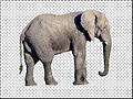 Éléphant (détouré).jpg
