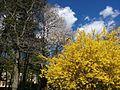 Весна в парку, цвітуть кущі.jpg