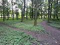 Дендрологічний парк «Заставнівський» - 2.jpg