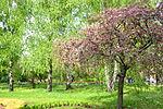 Донецкий ботанический сад 3.jpg
