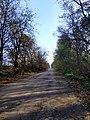 Дорога на с. Буйволівці, фото 2.jpg