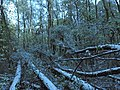 Измайловский парк - panoramio (11).jpg