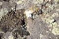 Кальмиусский заповедник 195.jpg