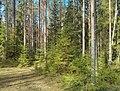 """Лесной массив """"Старая граница"""" 01.jpg"""