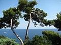 Монако, морське узберіжжя.jpg