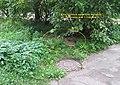 Невская Дубровка. Куча отходов от чистки колодцев вывалена у подъезда жилого дома ул. Томилина дом 3 - panoramio.jpg
