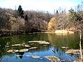 Озеро, Шаровский парк.JPG