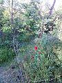 """Парк шума """"Гази Баба"""" 48.jpg"""