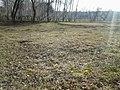 Первые цветы - panoramio.jpg